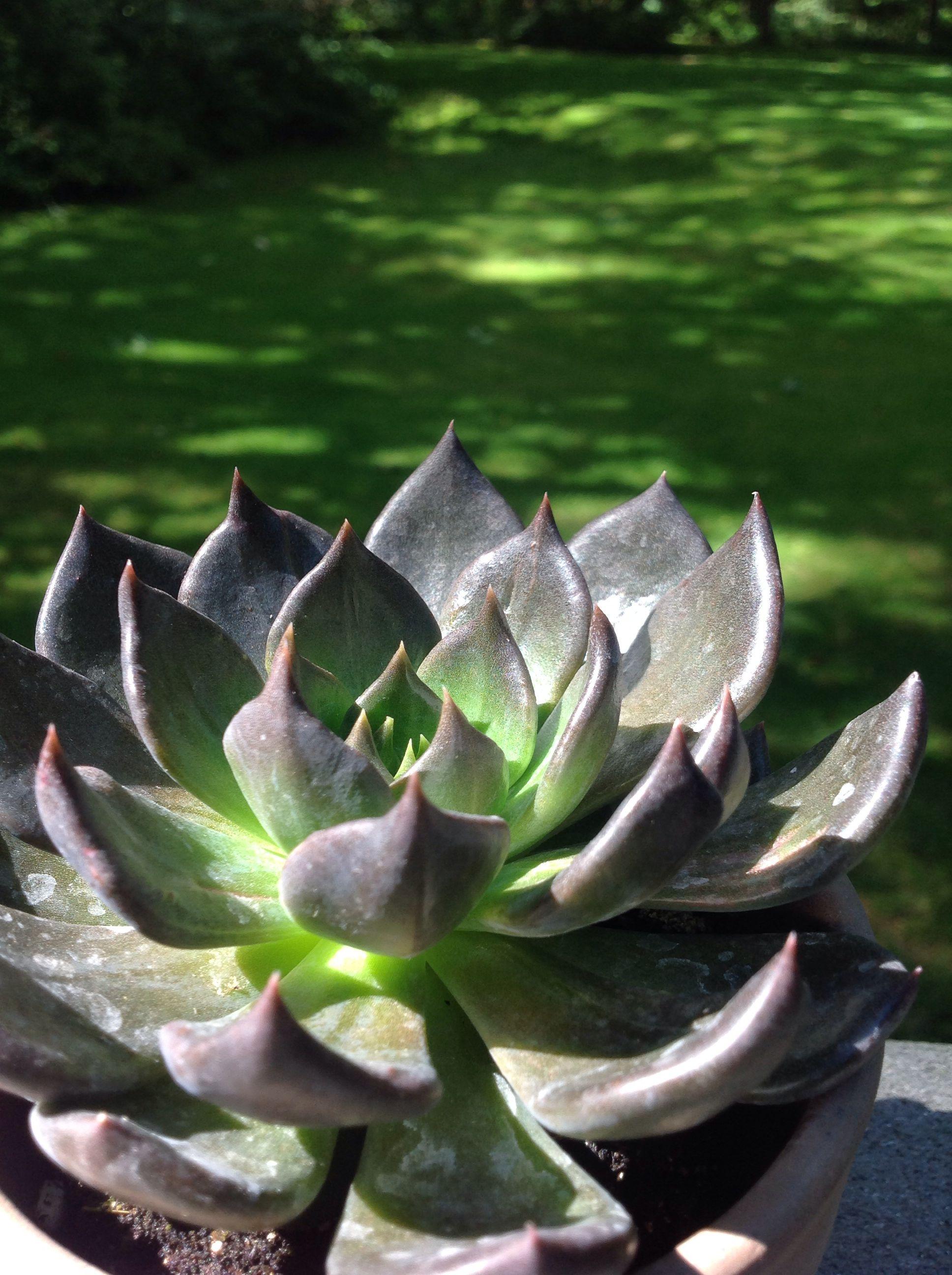 Cool succulent flowers and plants pinterest - Cool succulent plants ...
