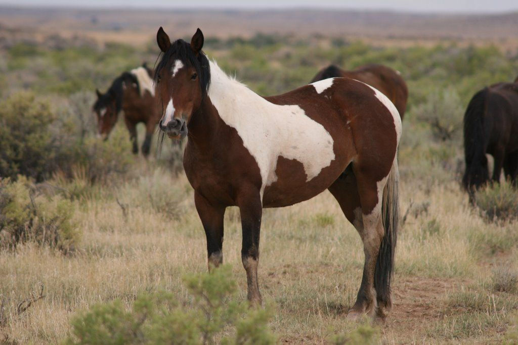 Mustang horse painting - photo#25