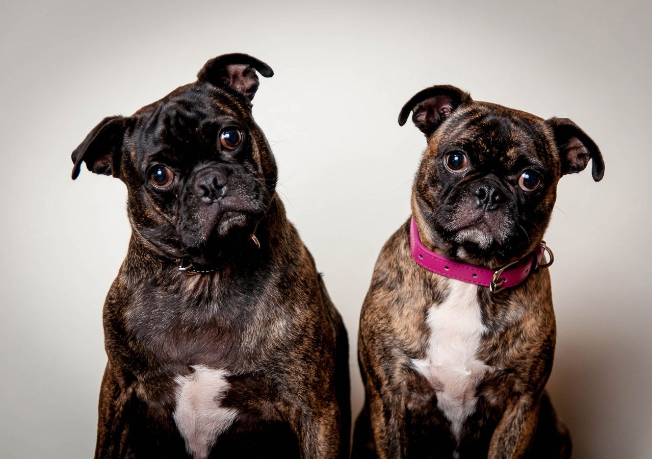 The Buggs! | Bugg Dogs | Pinterest