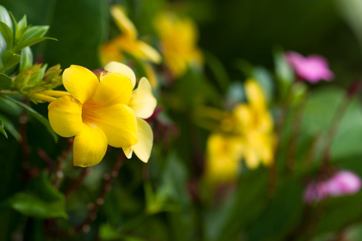 Yellow and pink tropical flowers tropical flowers for Polygonalplatten quarzit tropical yellow