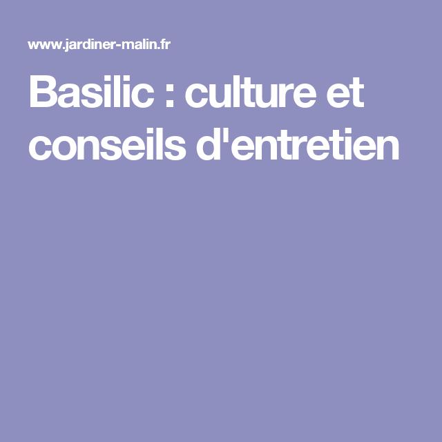 Basilic cultiver cultiver ses aromatiques a l interieur jpg basilic cultiver plantes - Comment faire pousser du basilic ...