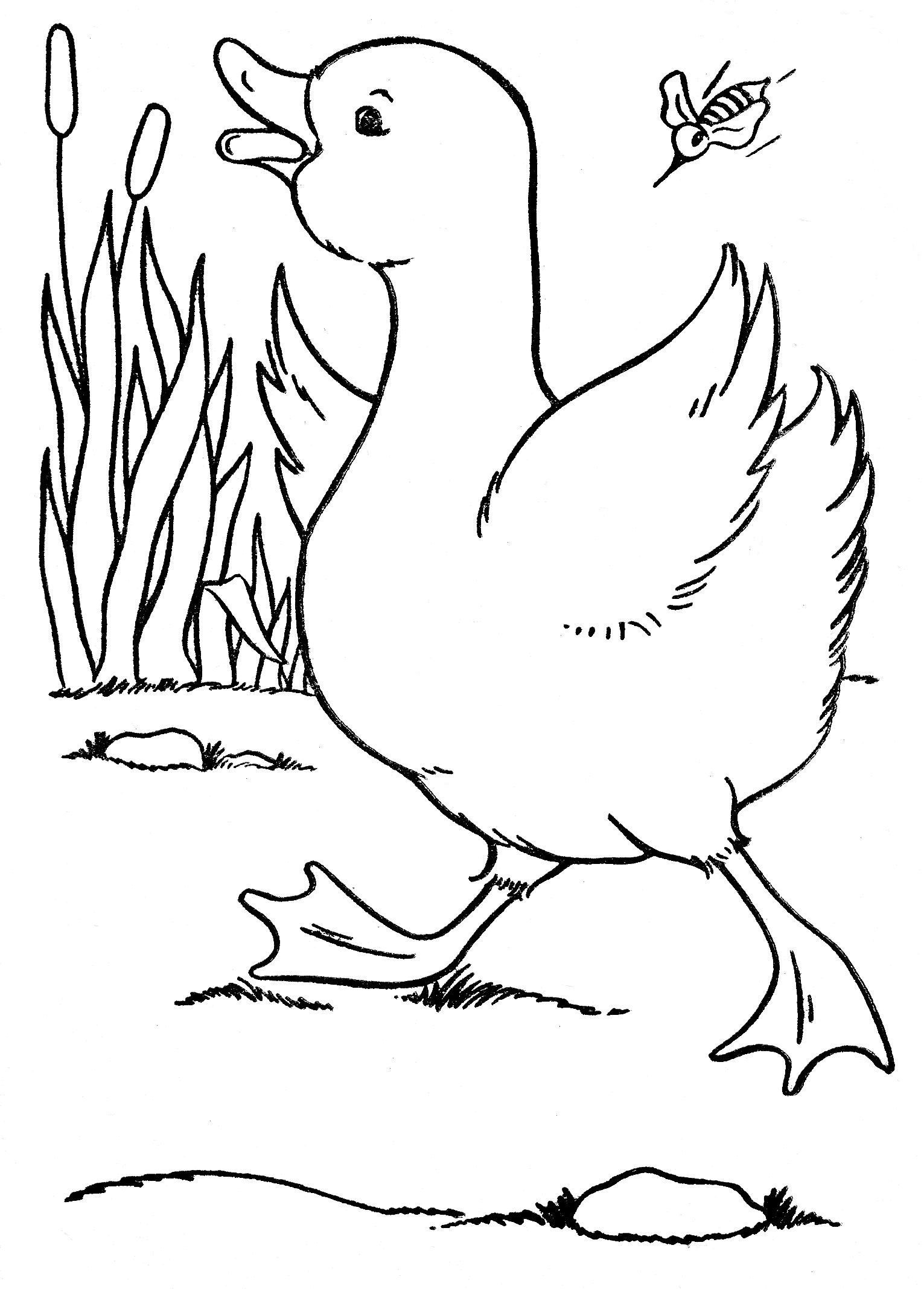 Lebron james cartoon coloring pages for Lebron james coloring pages