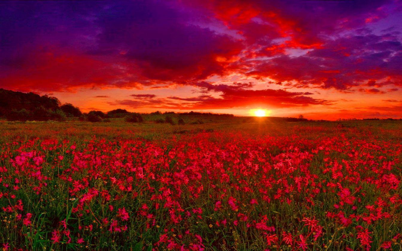 Sunset | Field of Flowers | Pinterest