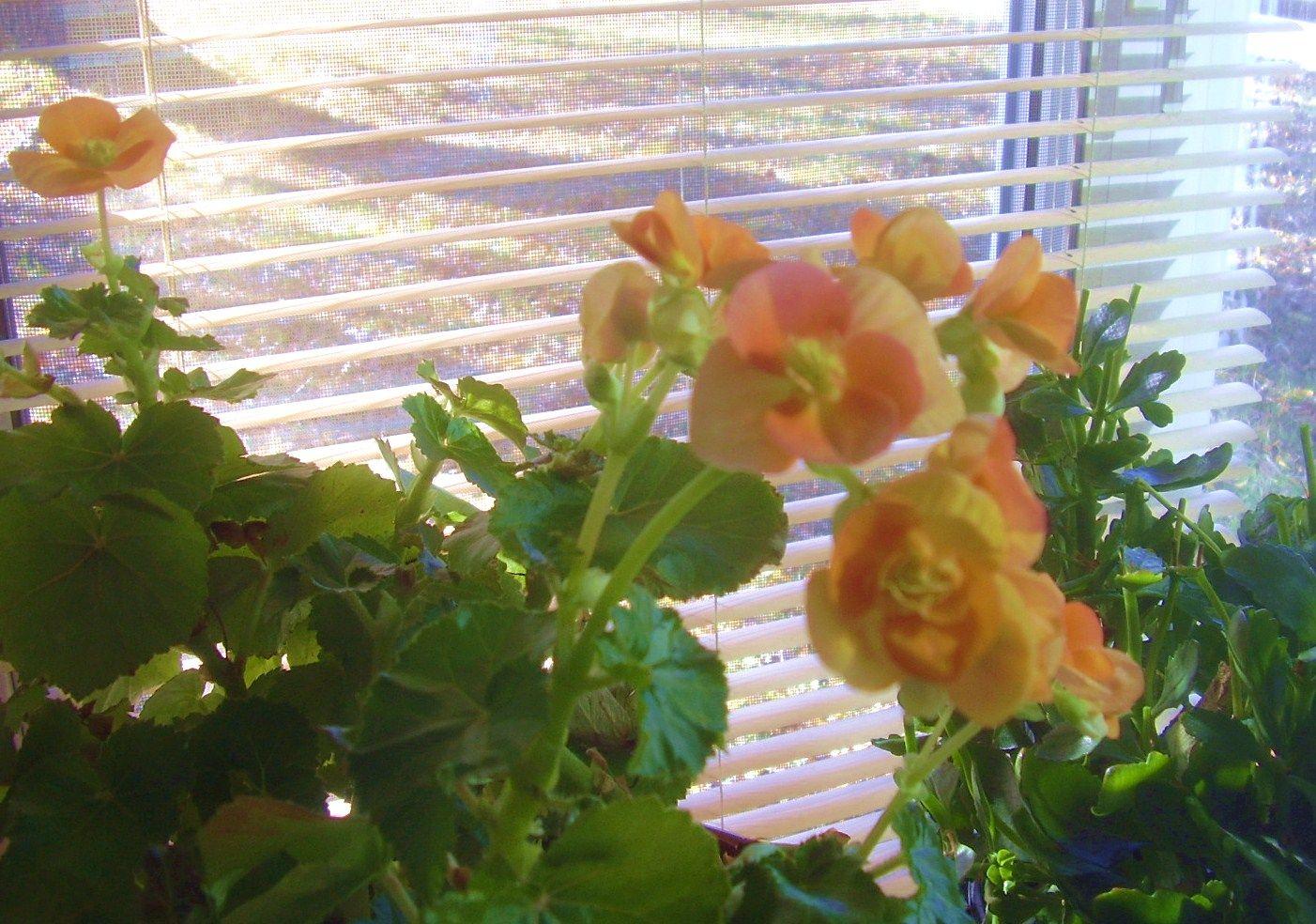 November Flowers Pinterest
