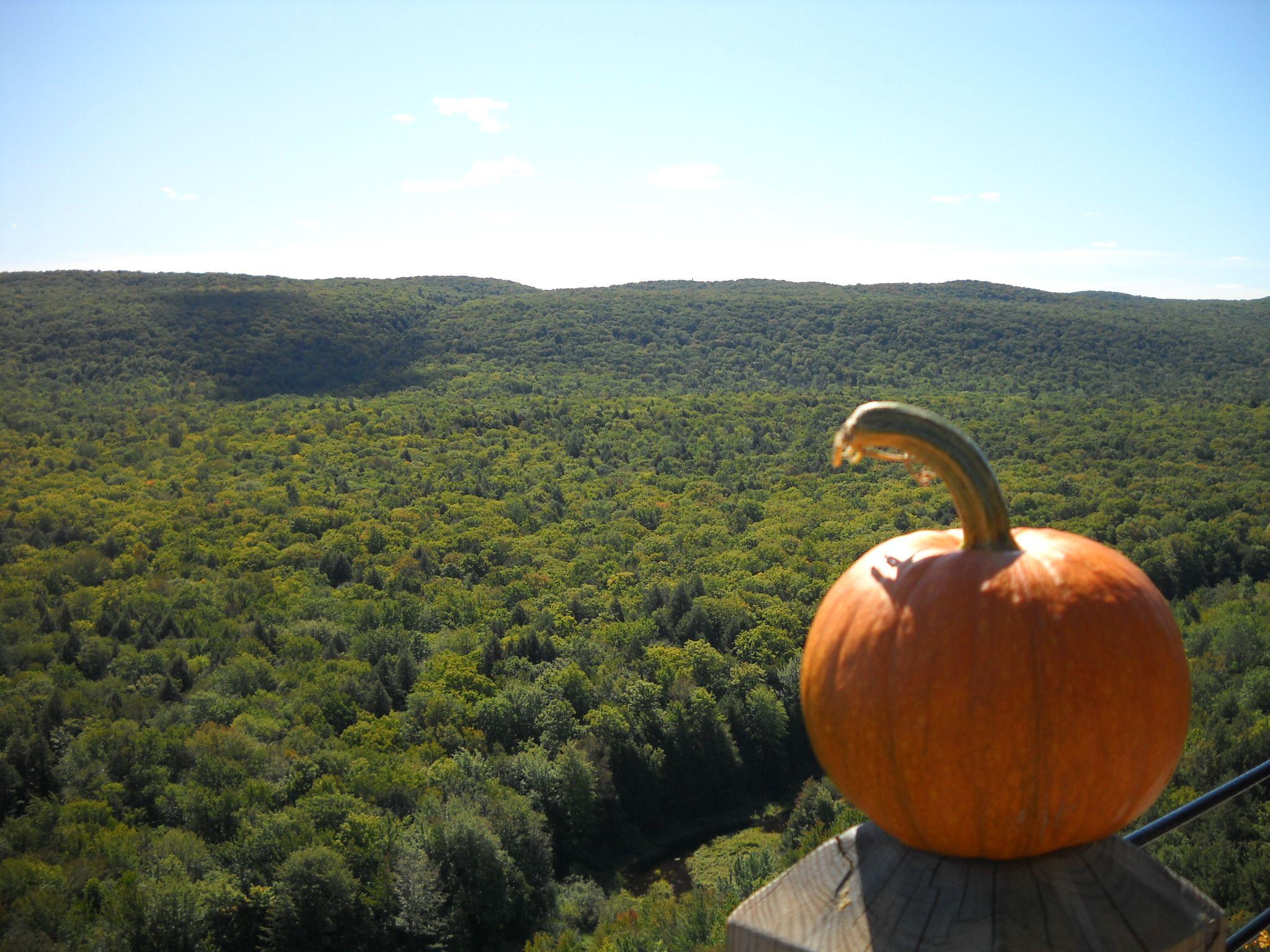 Pumpkin Patch Dexter Michigan