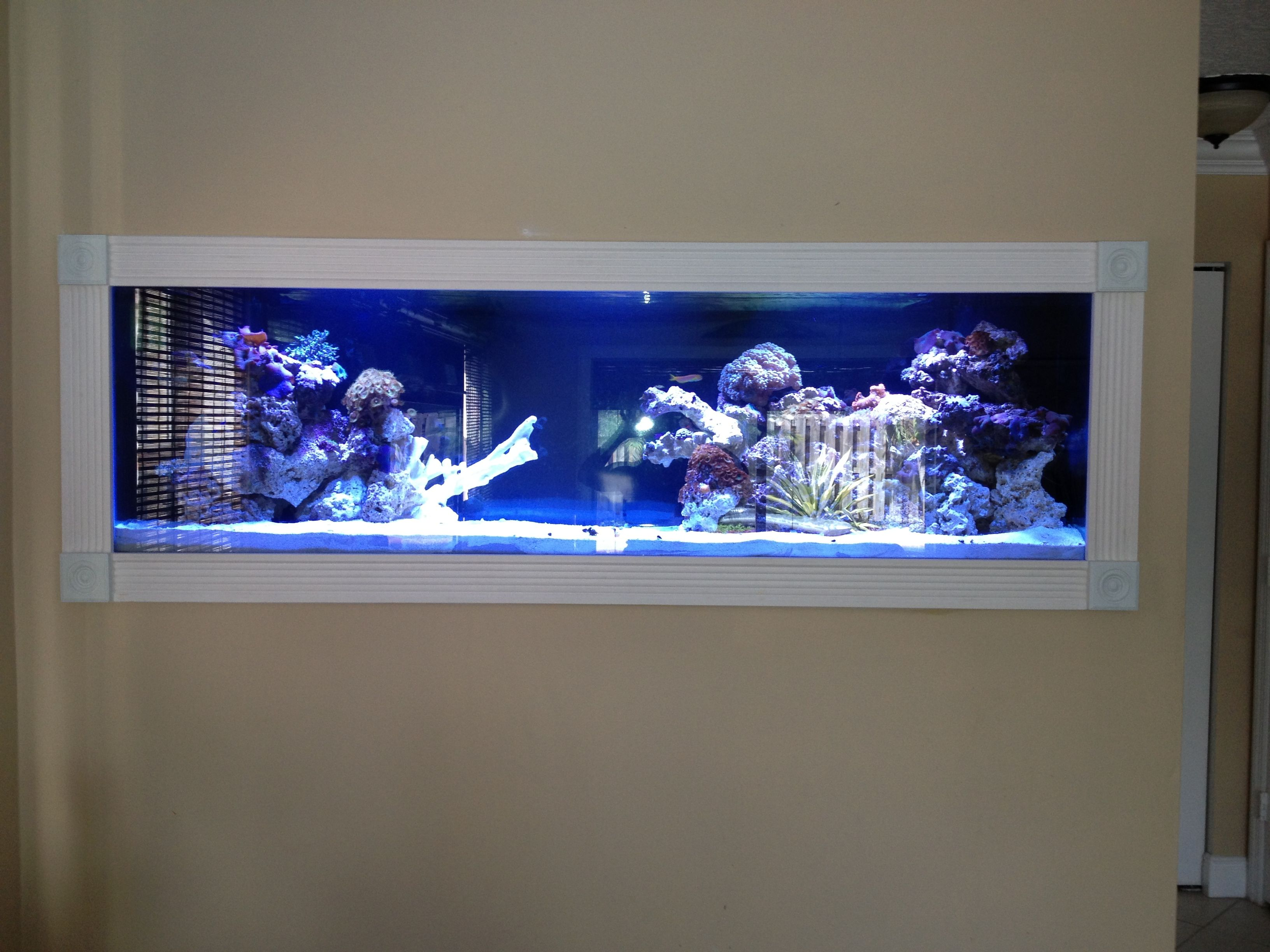 Fish tank in the wall i 39 m gonna make this place your for Fish tank in wall