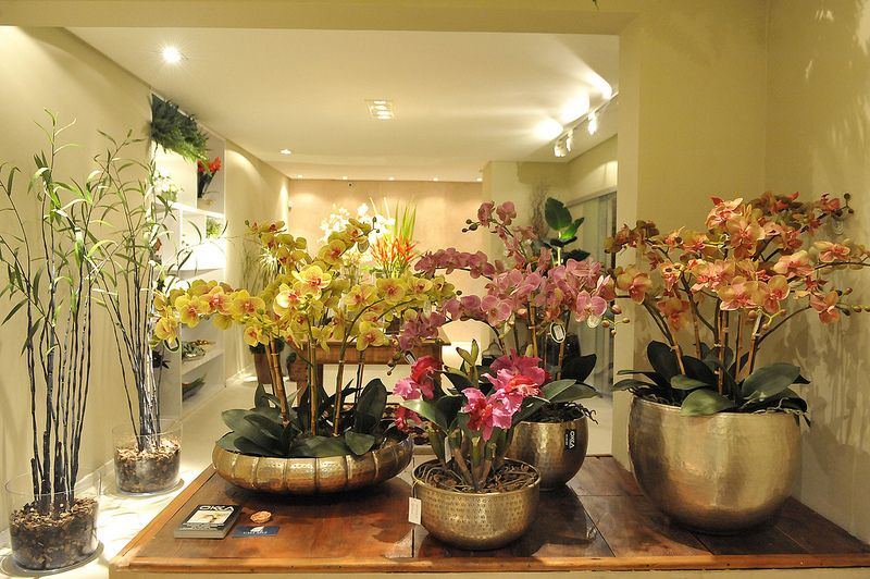Orquídeas Da Okka Interiores. ~ Vasos Decoracao De Interiores