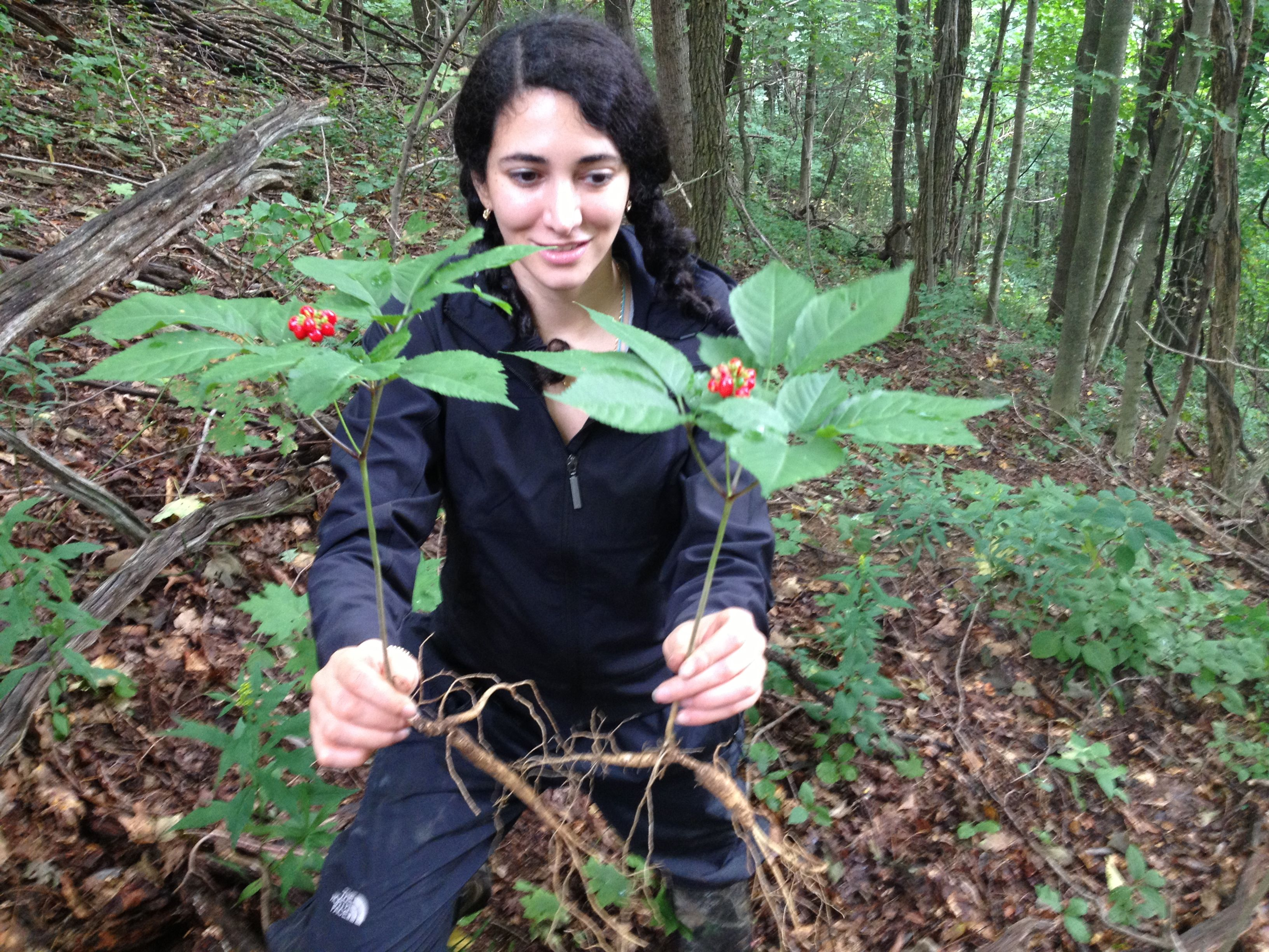 how to grow ginseng outdoors