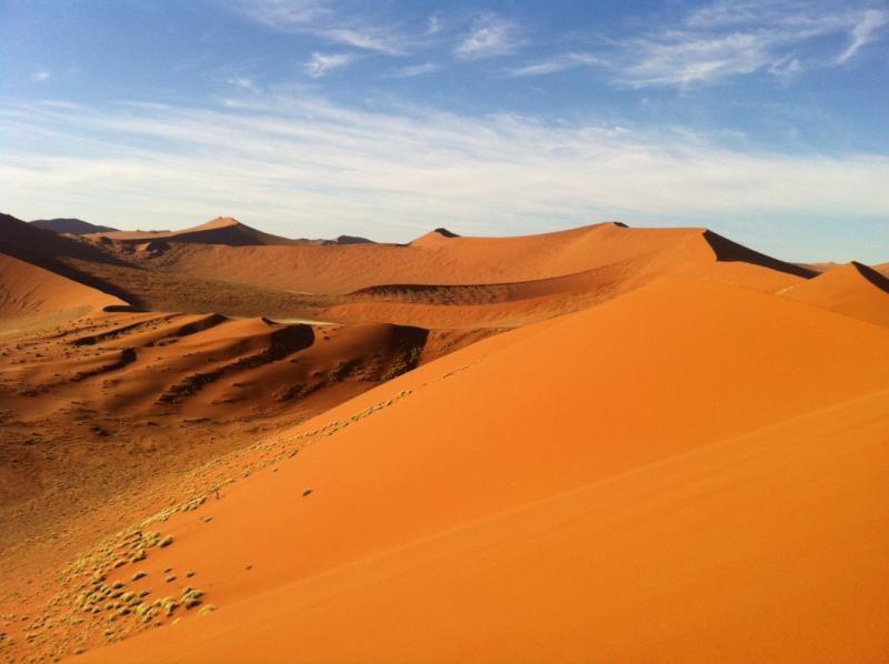 ナミブ砂漠の画像 p1_24
