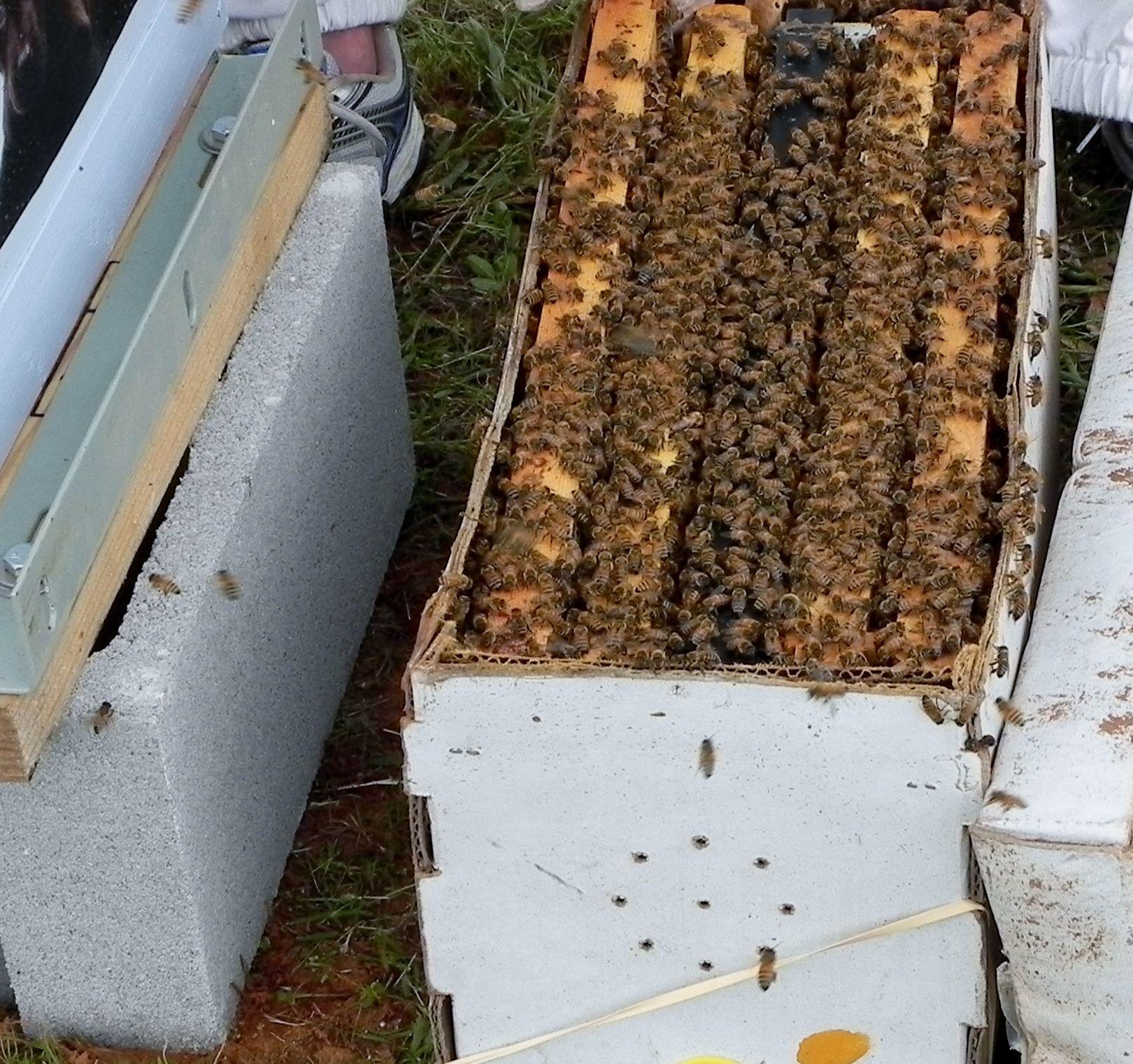 Nuc Of Honey Bees Bee Keeping Amp Bee Gardening Pinterest