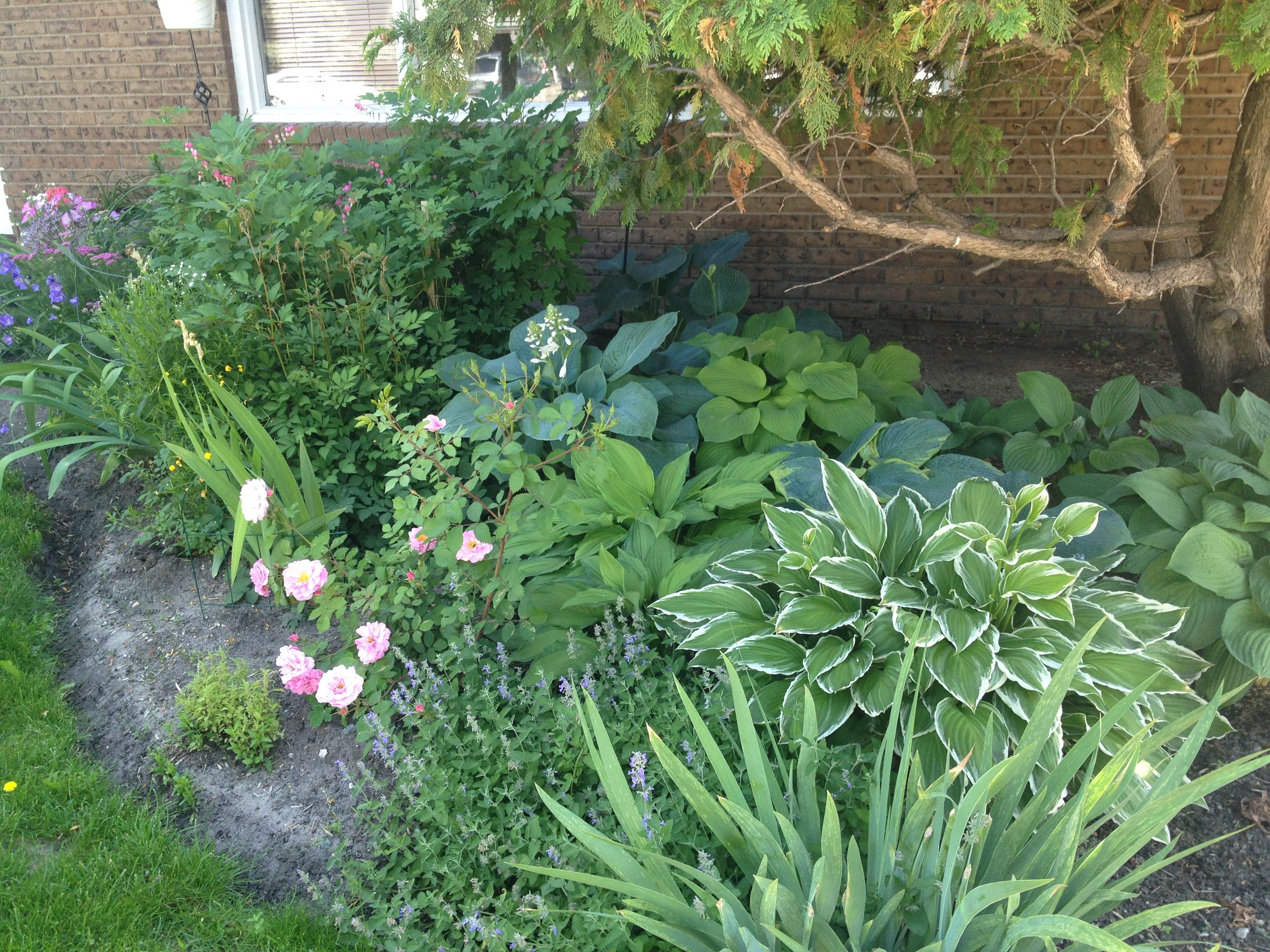 Landscaping Front Yard Landscaping Ideas With Hostas