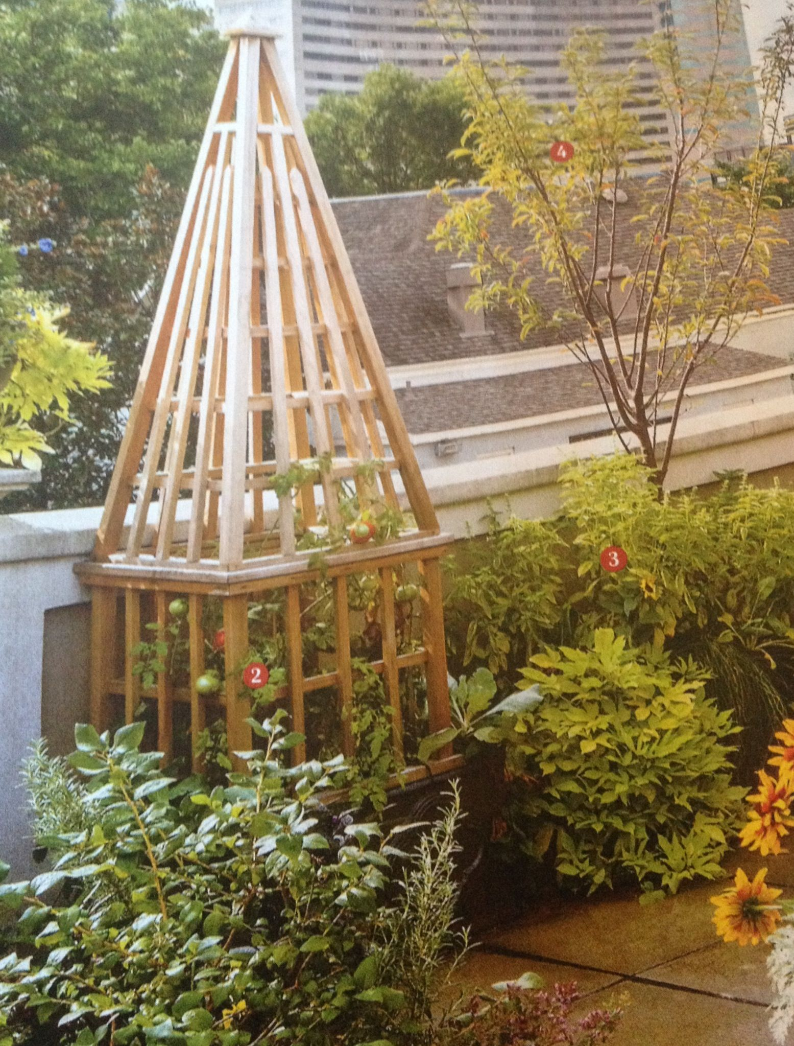 Tomato cages vegetable garden tomatoes pinterest for Garden cage