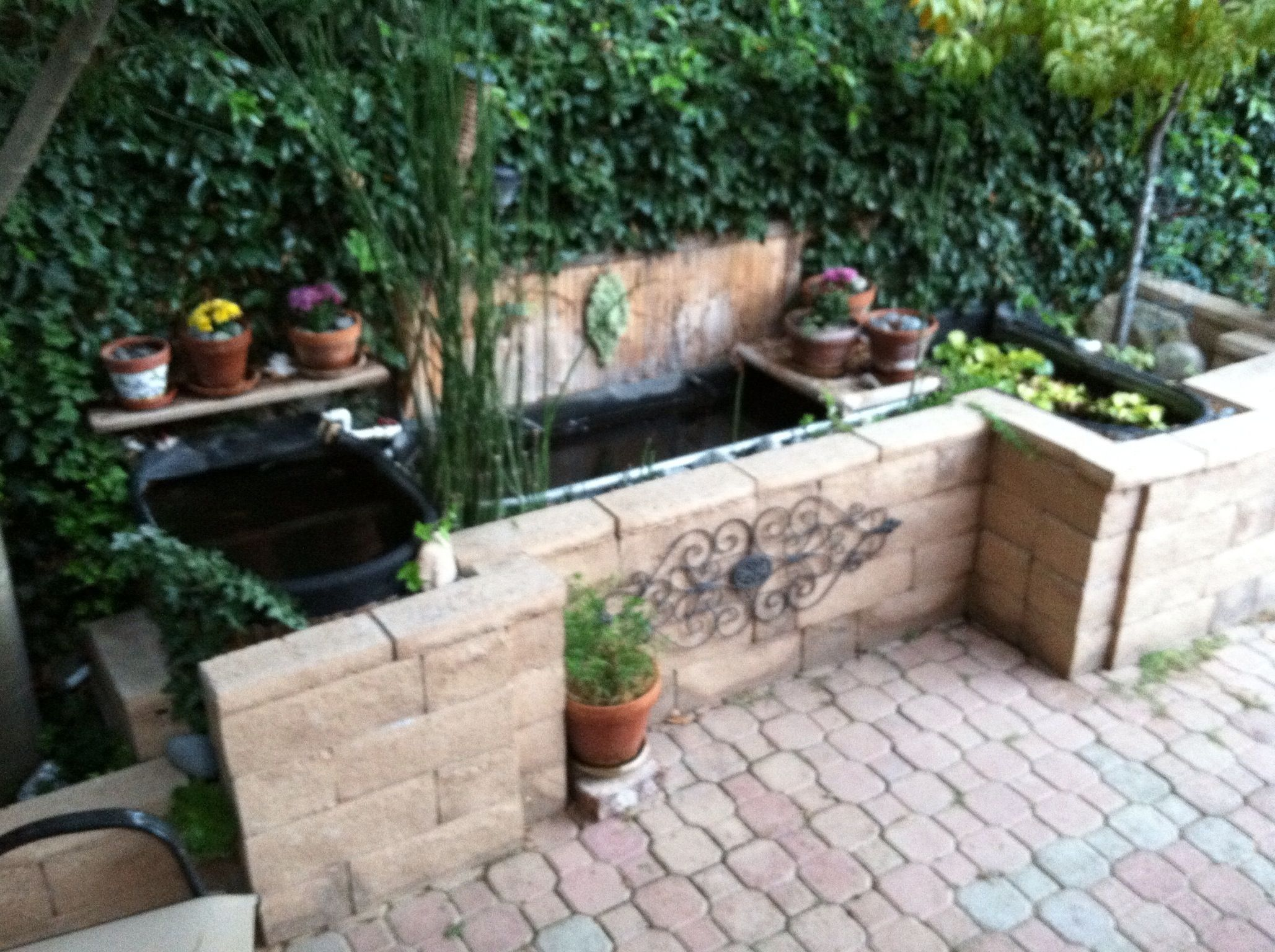 Back yard above ground fish pond gardening pinterest for Above ground koi fish pond