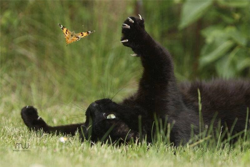 Image result for Cat and butterfly