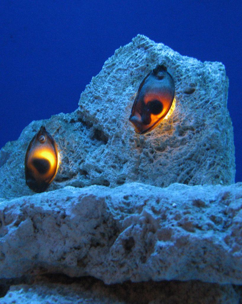 Shark eggs under the sea 1 pinterest for Sharks fish chicken birmingham al