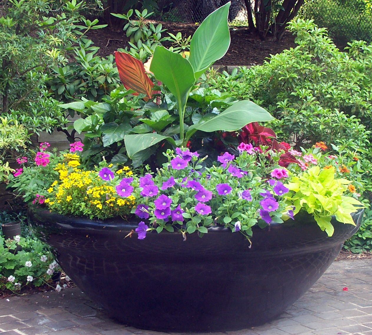 Large sun container garden in a pot pinterest - Large container gardening ...