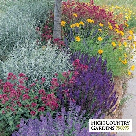 Grow more flowers using less water with this arresting combination of long-blooming, easy-care perennials.  Their bright, clear
