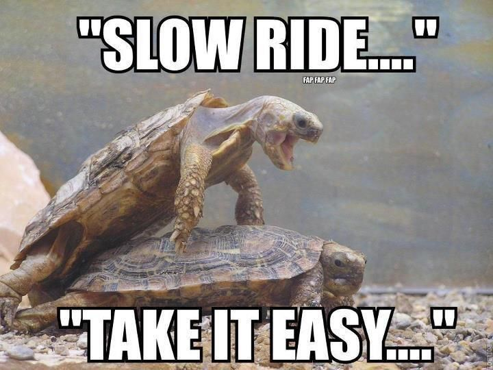 Slow Ride .. take it easy #turtle #humor | Turtles | Pinterest