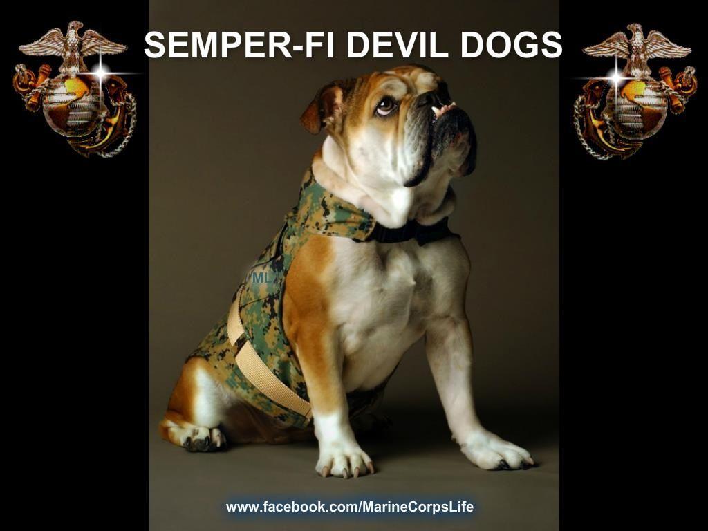 Devil Dogs Recipe — Dishmaps