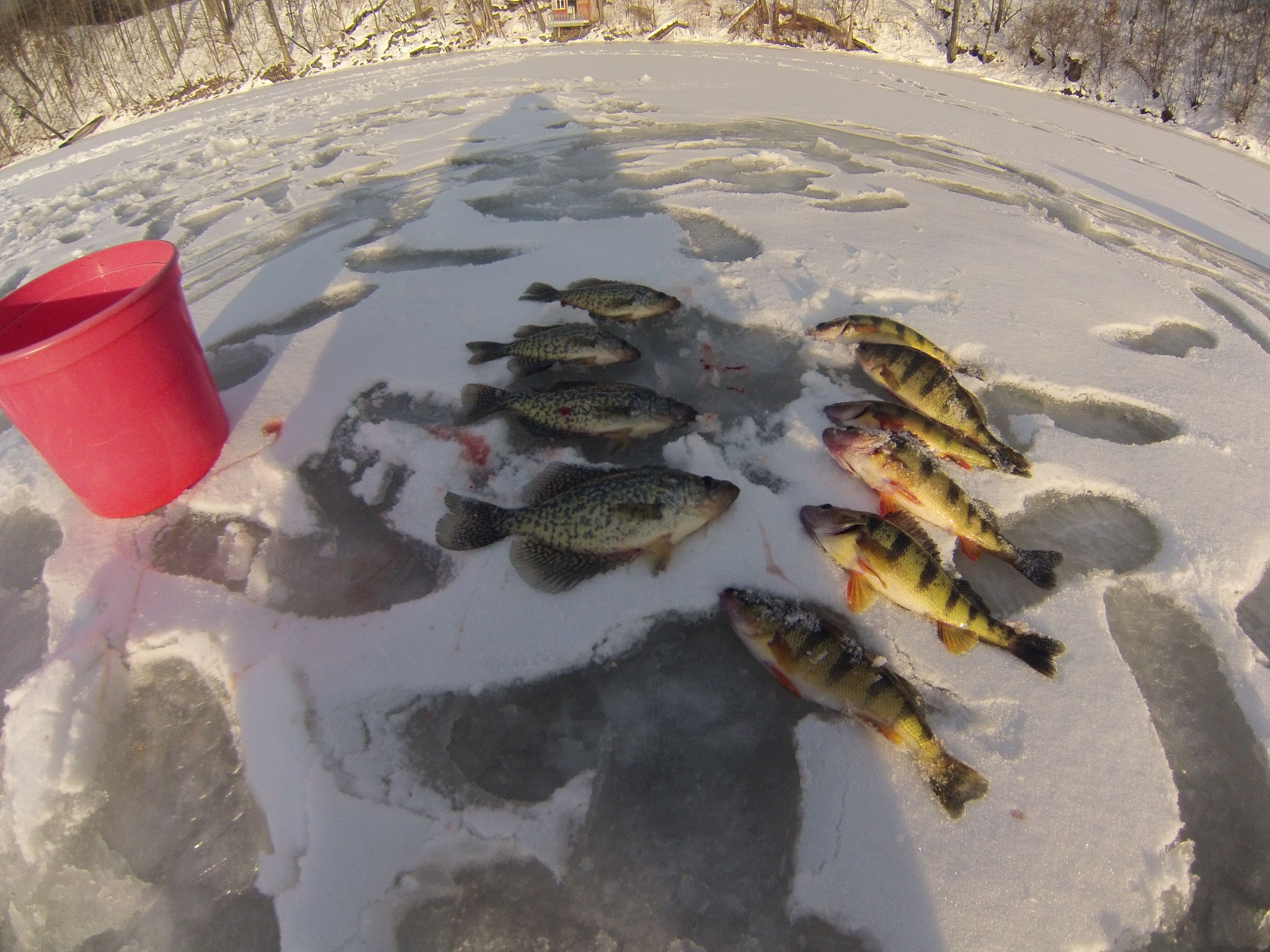 Some Perch And Crappies On The Ice Ice Fishing Vermont