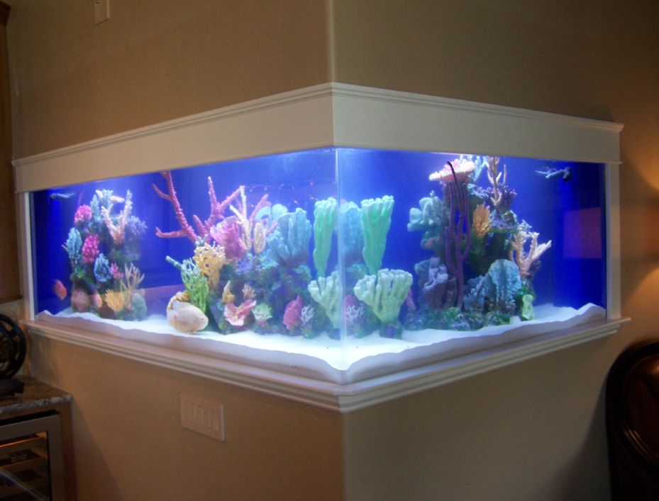 Another awesome fish tank idea cool fish tanks pinterest for Awesome fish tanks