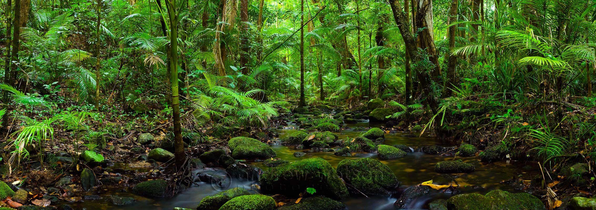 Dantree rainforest queensland australia conquering the for Australian rainforest