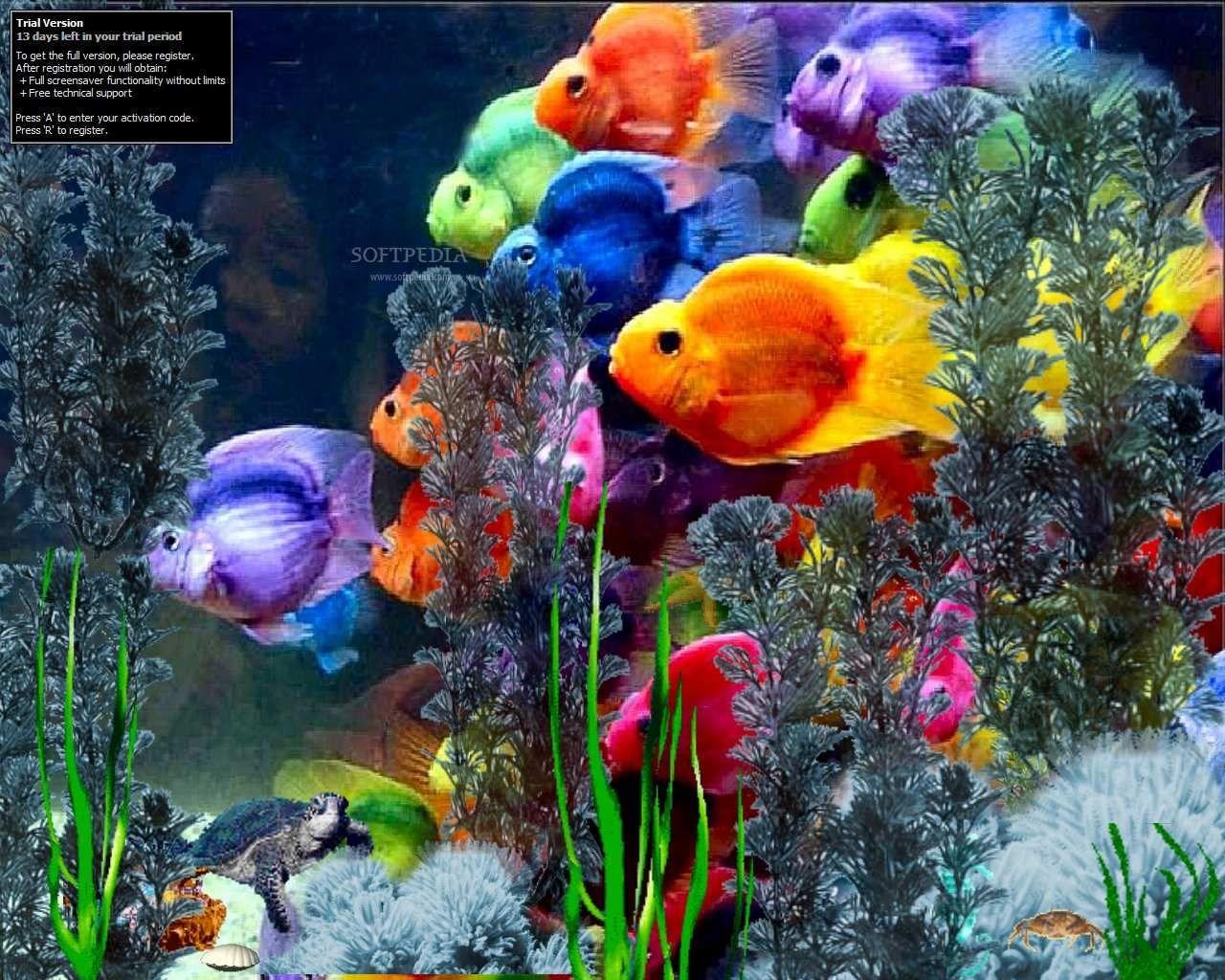 Rainbow fish nature 39 s beauty god 39 s handiwork pinterest for Rainbow fish pictures