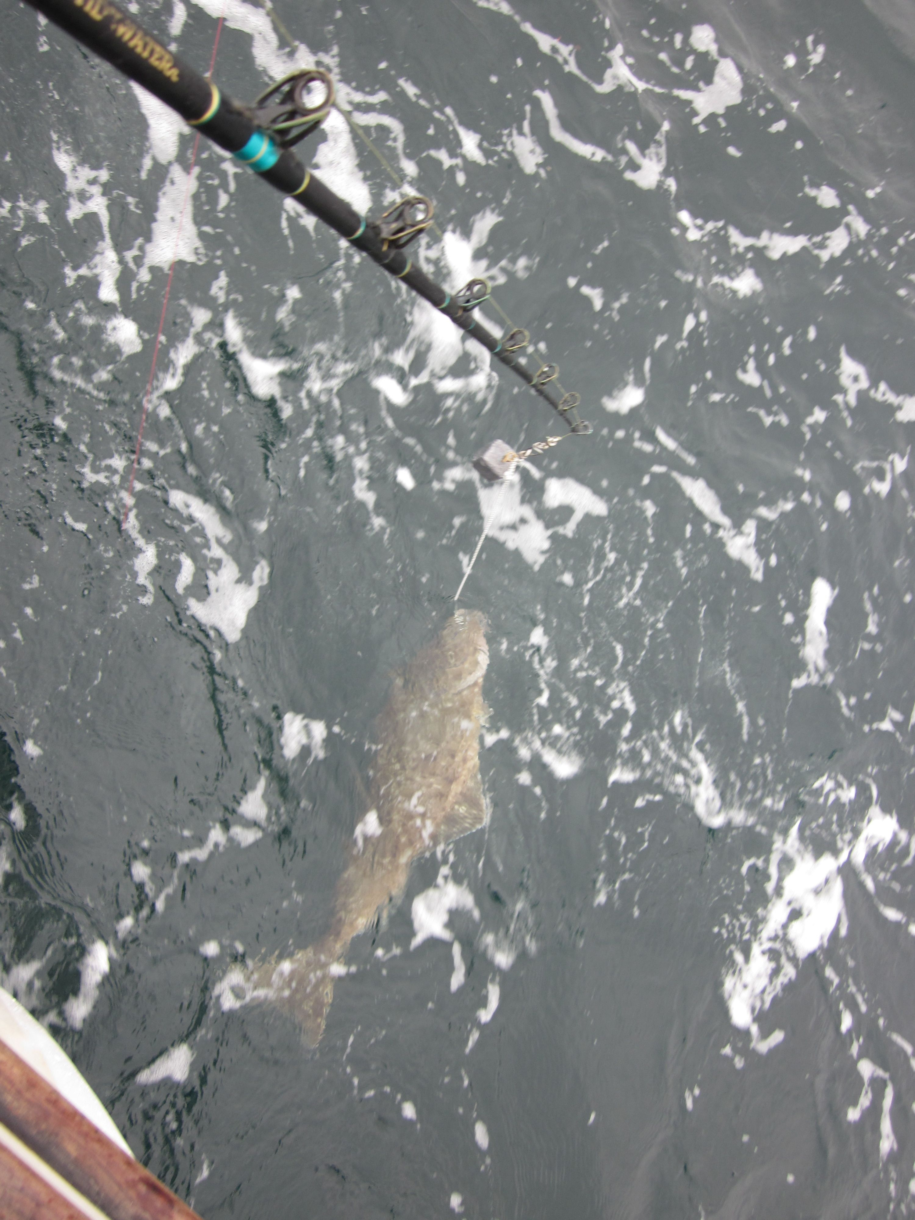 Halibut fishing in homer alaska places i have been for Halibut fishing homer