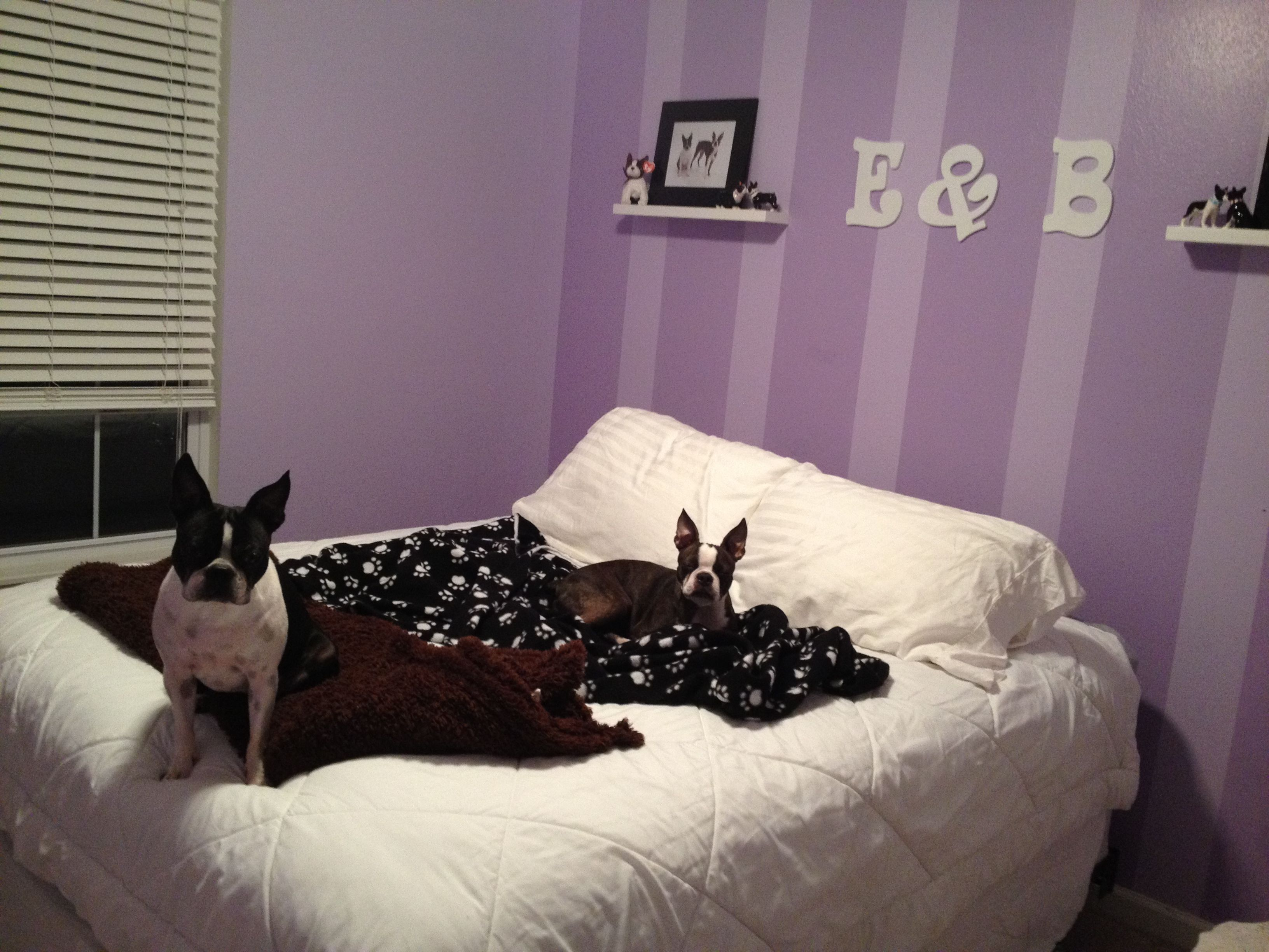 the dogs bedroom home ideas pinterest