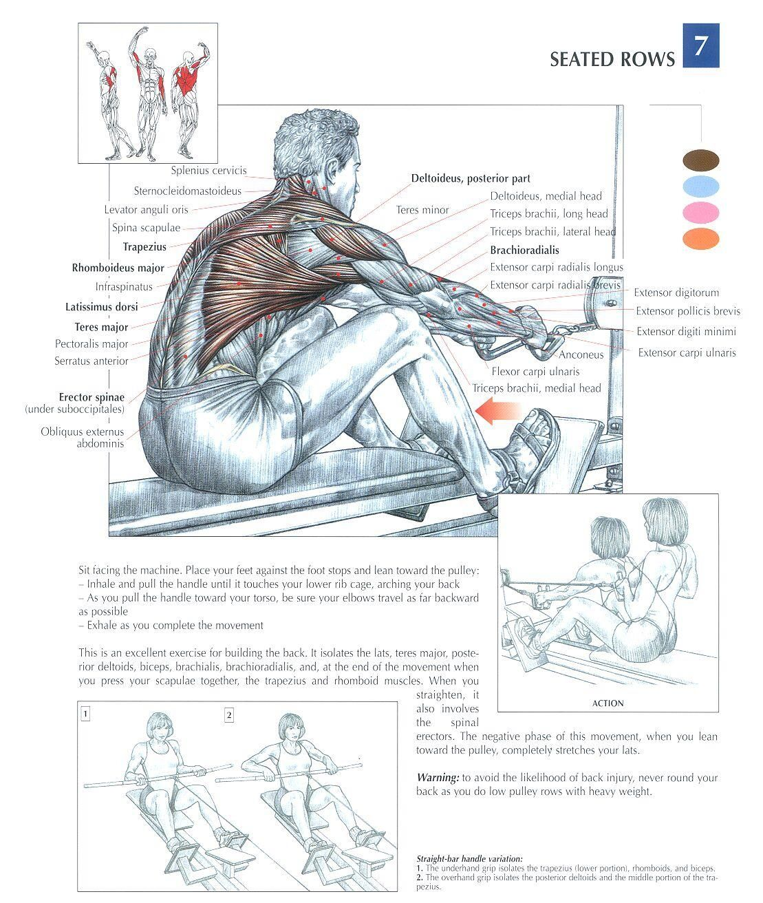 seated row machine muscles worked