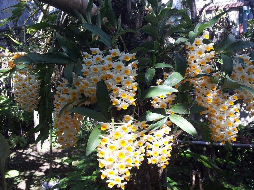 Las orqu deas de mi jardin orqu deas pinterest for Jardines de orquideas