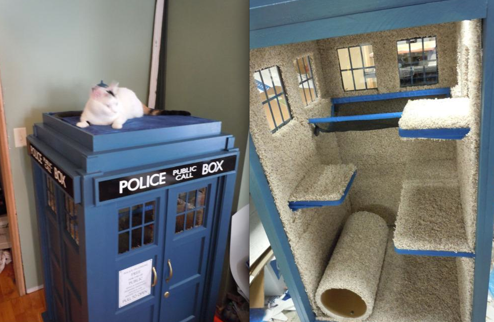 burbank animal shelter cats