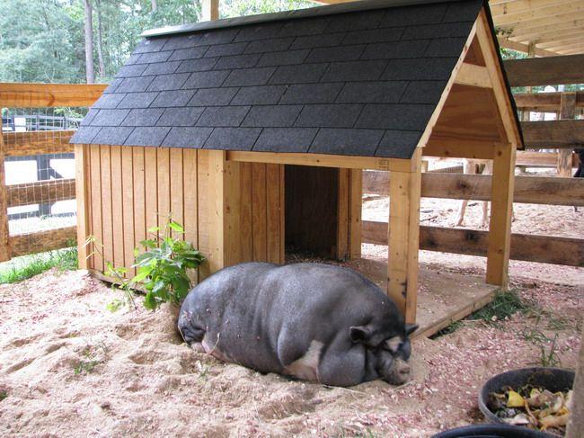 Как сделать дом для свиней