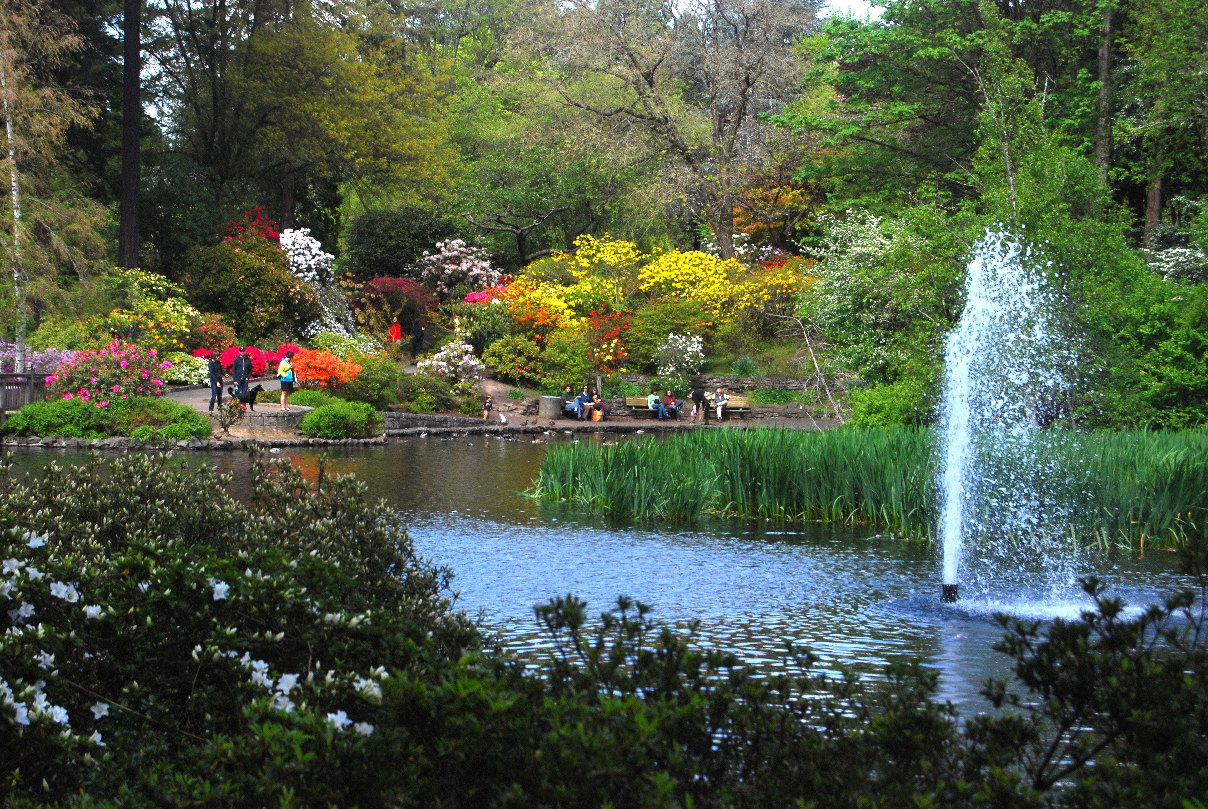 Rhododendron gardens Portland OR Portland Pinterest