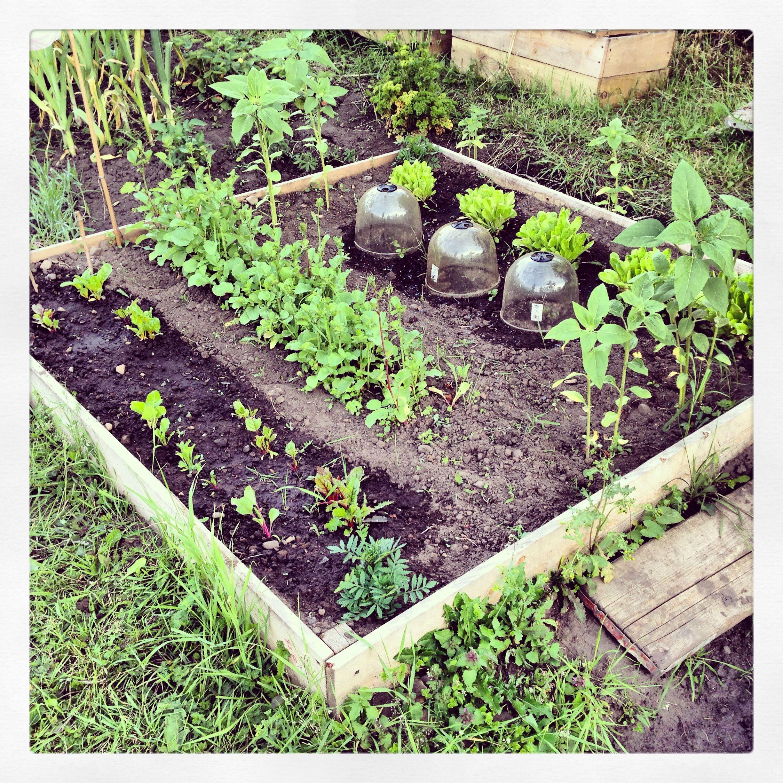 Raised bed garden ideas pinterest for Garden design pinterest