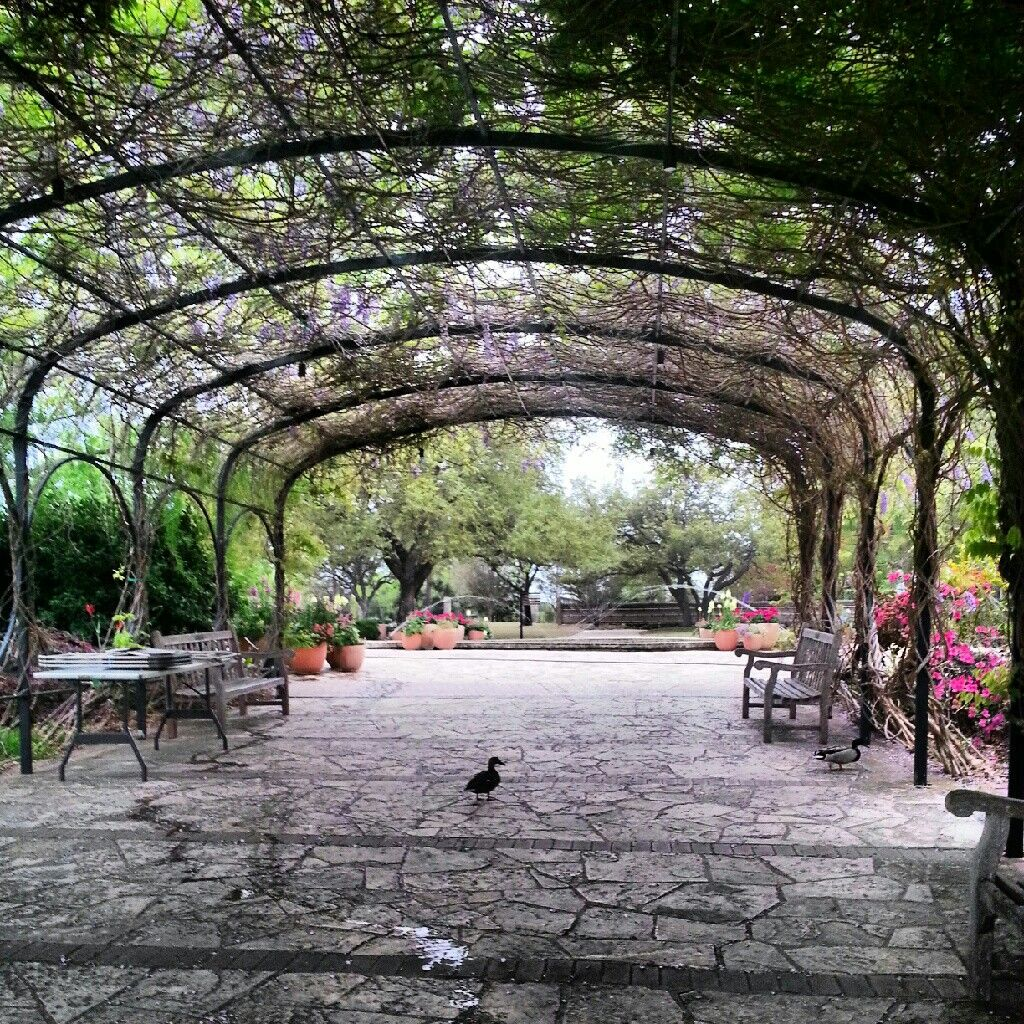 San Antonio Botanical Gardens I Love Texas Pinterest