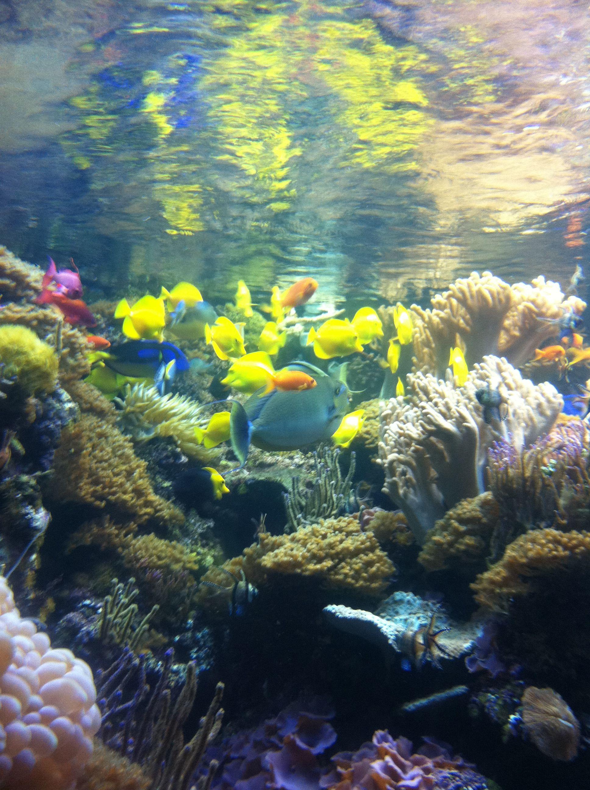 National aquarium in baltimore baltimore pinterest Aquarium in baltimore