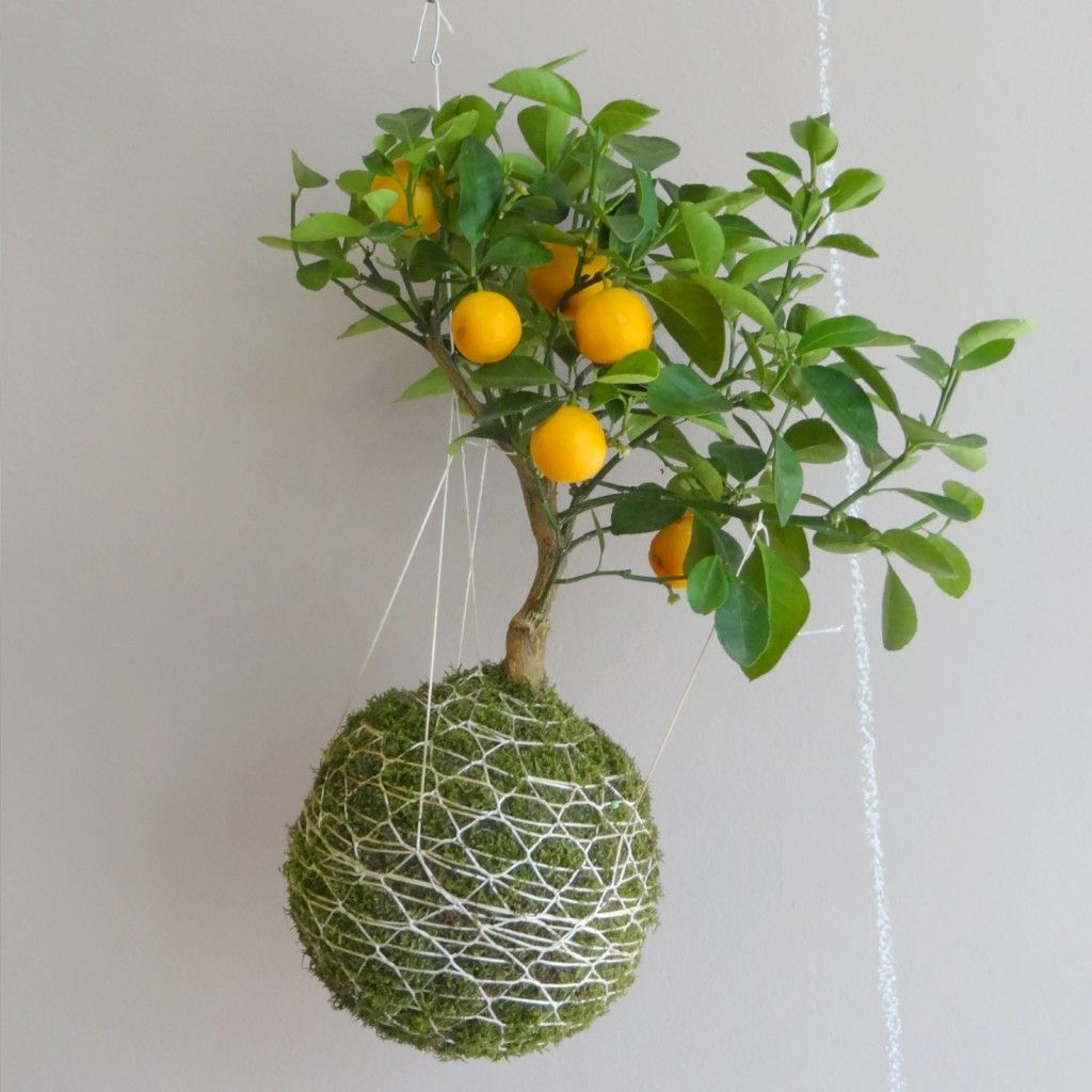 Kokedama zahrada na niti plants pinterest for In a garden 26 trees are planted