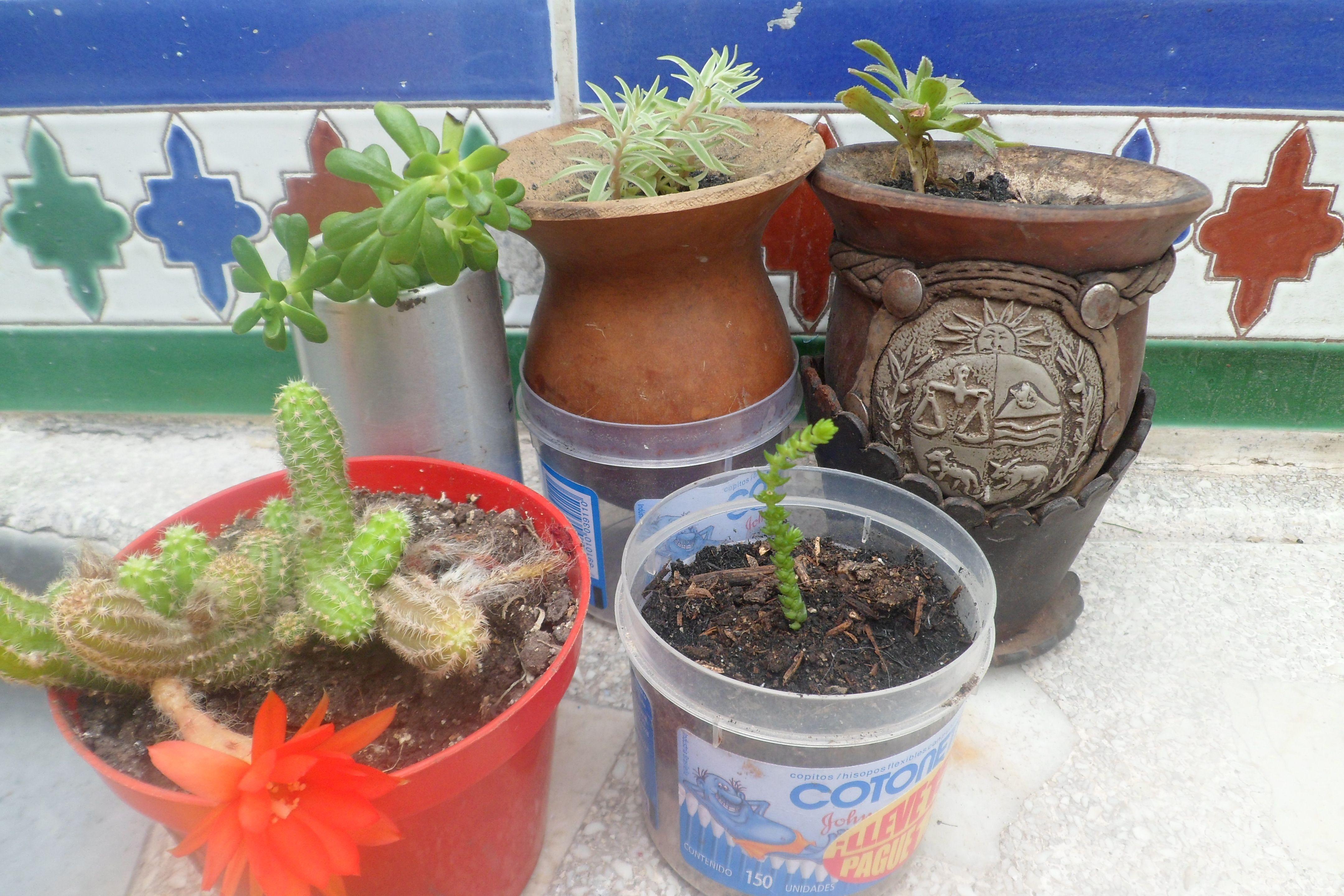 Diferentes tipos de cactus o suculetas flores de mi for Tipos de jardines