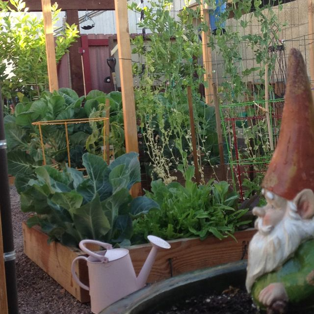 Small Backyard Edible Garden : My small backyard garden )  Edible Garden (Backyard)  Pinterest