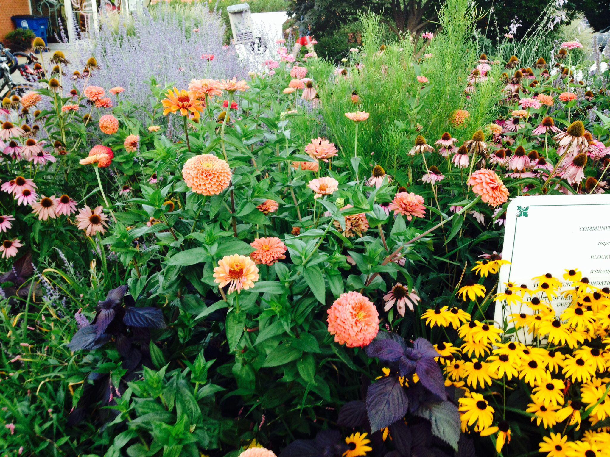 Wildflower garden Home Ideas Outdoors Pinterest