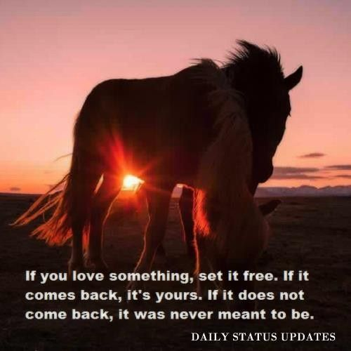 Funny Quotes If You Love Something Set It Free : if you love something, set it free...