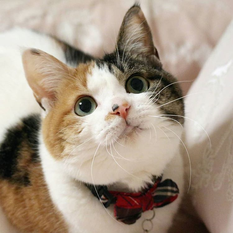 猫 んーにゃー