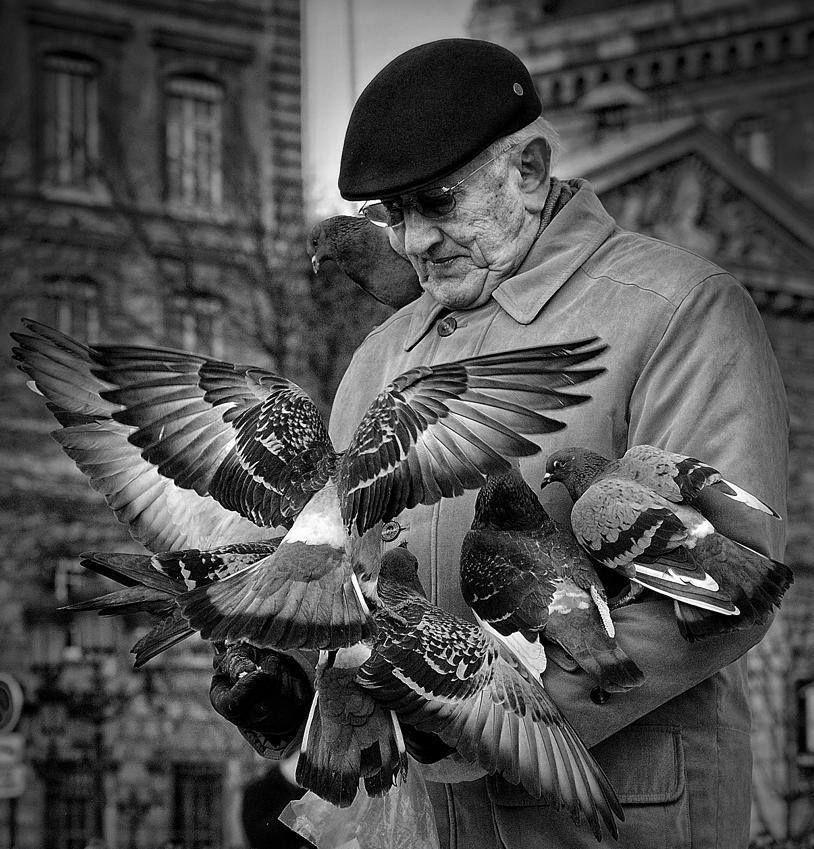 pigeons noir et blanc  Deco intérieur  Pinterest