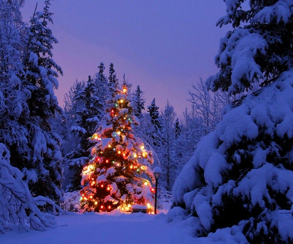 Decorated tree in the woods christmas pinterest