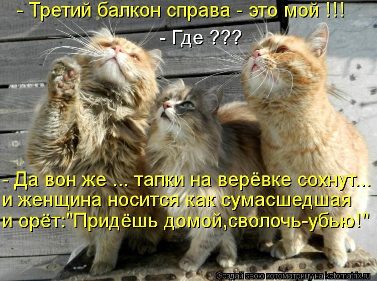 Анекдот Про Котиков