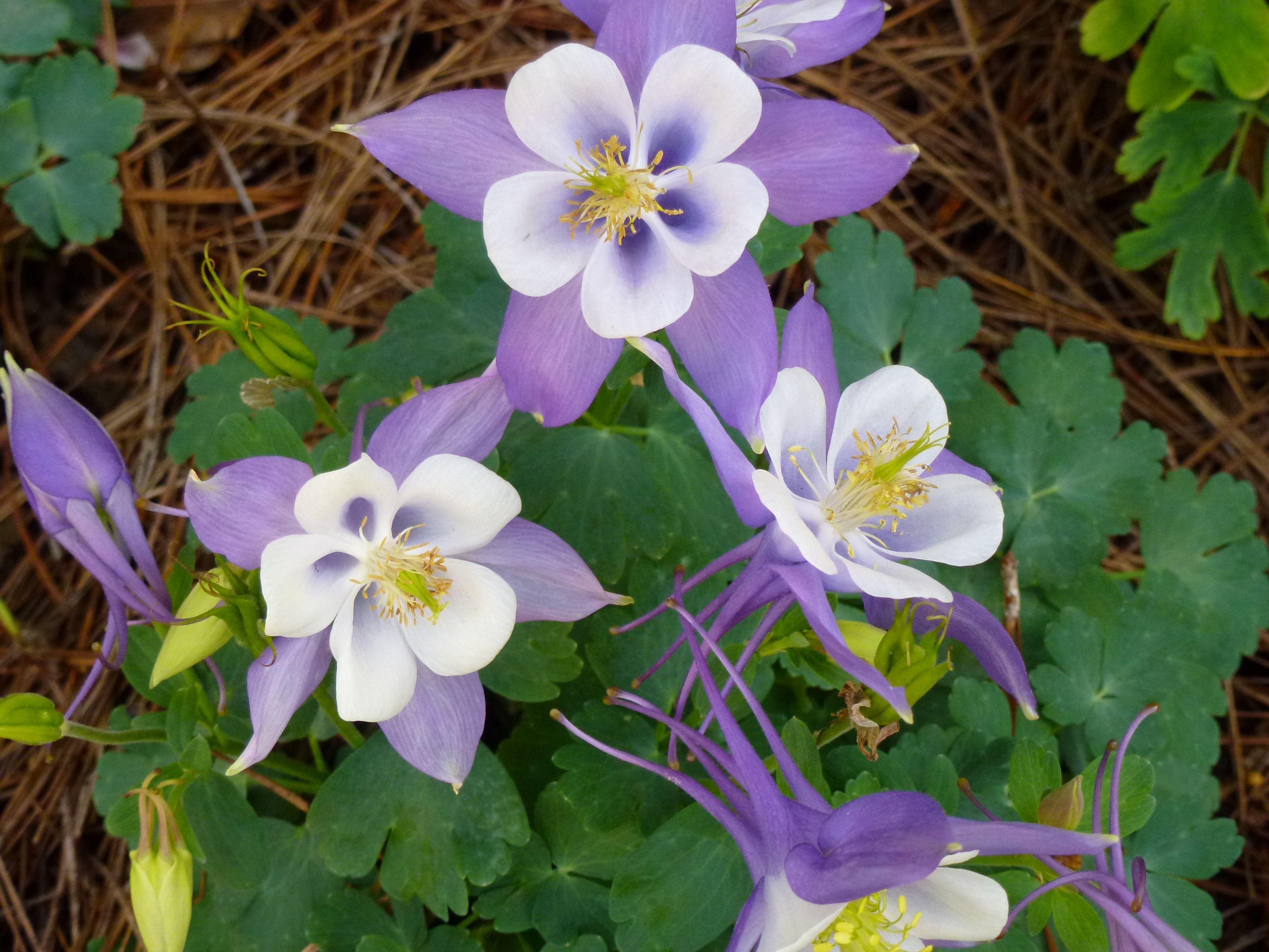 Shade Perennials Gardening Pinterest