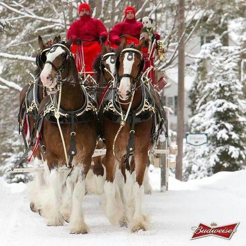 Budweiser Christmas | ...