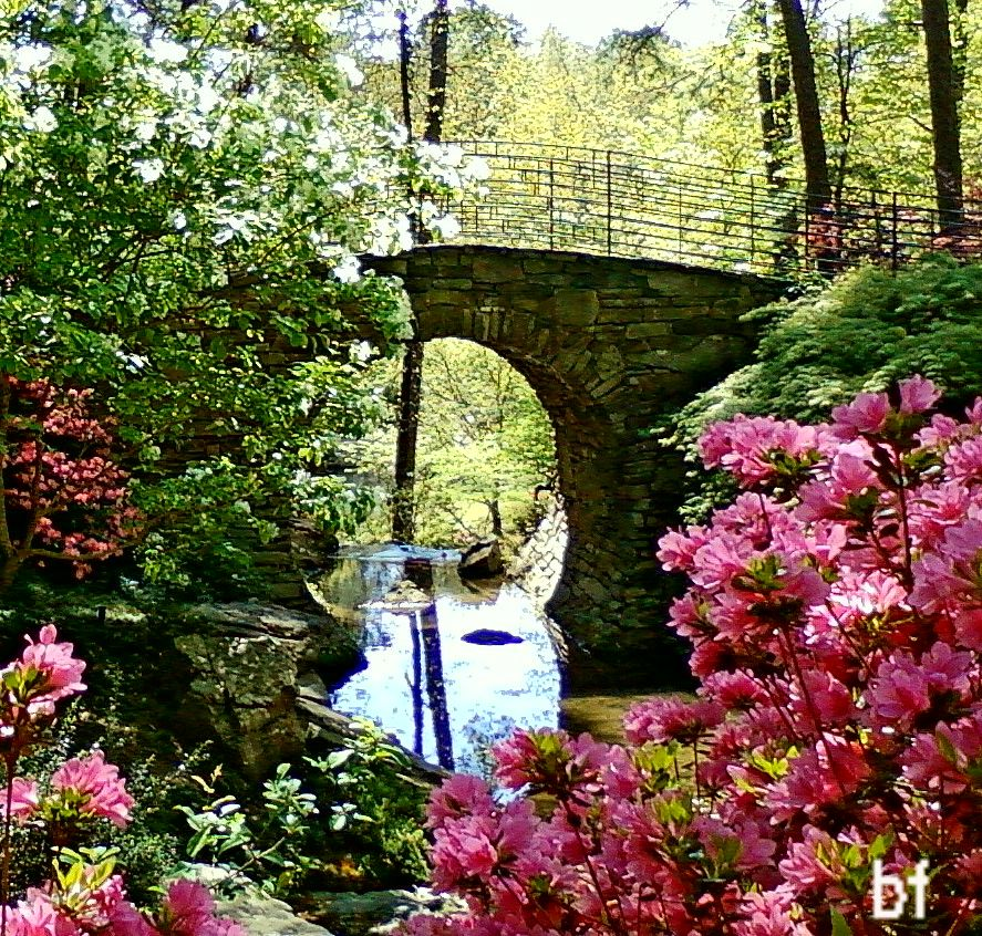 Garvan Woodland Gardens Beauty To Our Eyes Pinterest