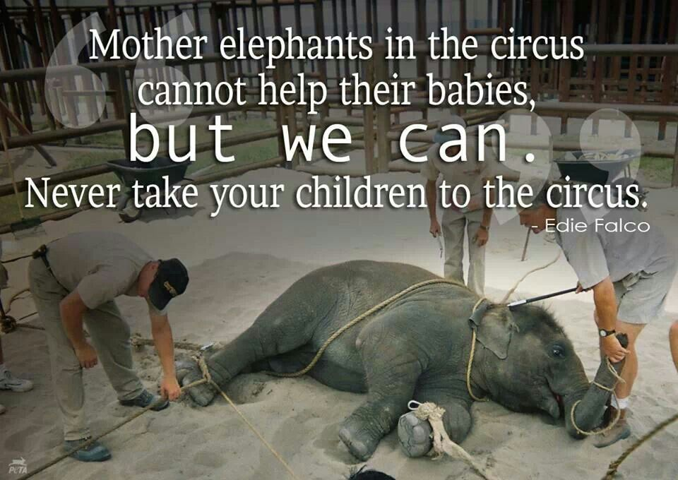 Animal Abuse Circus Circus Animal Abuse Quotes